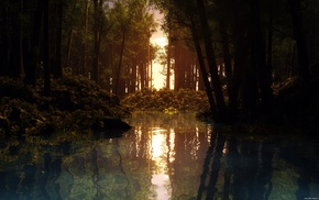 water, trees, forest, lake, reflection, sunset