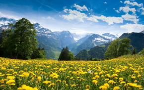 nature, forest, flowers, clouds, mountain
