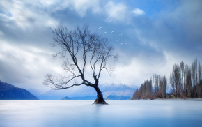 tree, clouds, nature, landscape, birds