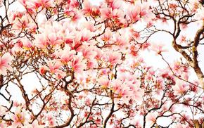 twigs, nature, tree, flowers