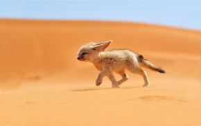animals, desert, fox