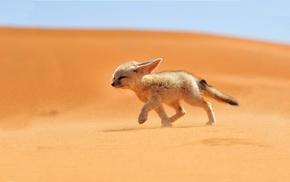 животные, пустыня, лиса
