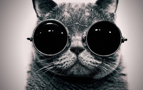 cat, black and white background, glasses, creative