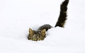 animals, cat, eyes, snow, winter