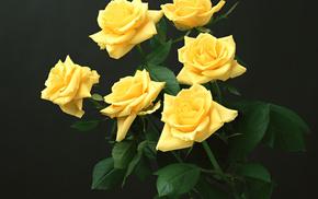 roses, flowers