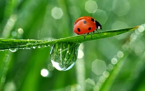 dew, stunner, reflection, nature, drops