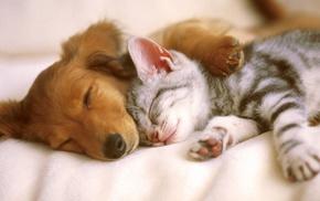 спят, дружба, кошка, животные, собака