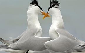 animals, love, beautiful, birds, wings