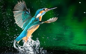 drops, water, wings, stunner, bird