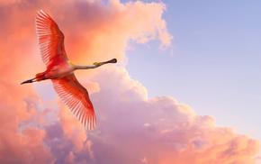 nature, fly, bird, sky, animals