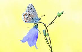 macro, butterfly, flower
