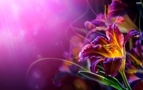 flowers, lilies, bokeh