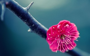 flowers, twigs, blossoms, nature, pink flowers