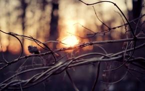twigs, depth of field, sunlight, nature