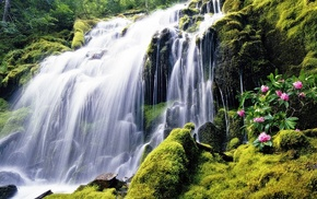 photoshop, flowers, water, forest, waterfall