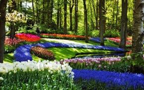 pond, creek, flowers, spring, nature