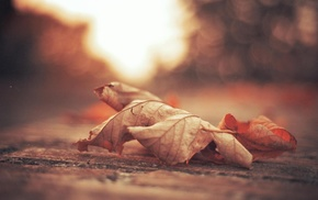 macro, depth of field, nature, bokeh, leaves, fall