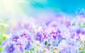 небо, макро, свет, природа, цветы, весна