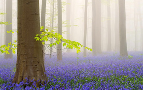 morning, trees, flowers, nature, forest