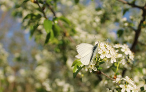 бабочка, весна, макро, цветы