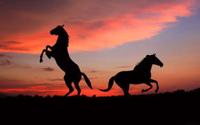 stunner, silhouette, sky, sunset, horse