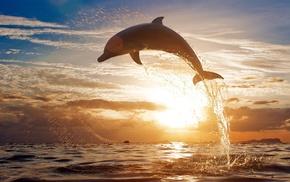 закат, море, дельфины, брызги, животные, прыжок