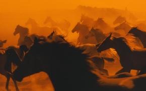 nature, horse