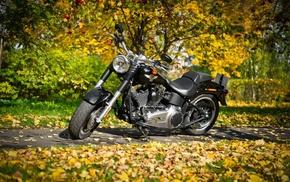 motorcycles, autumn, foliage