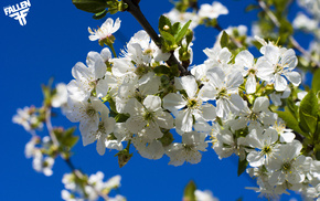 bloom, cherry, sky, spring
