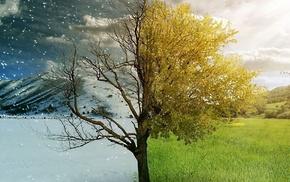 winter, summer, nature, tree