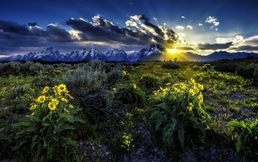 sunset, flowers, sky, nature, mountain