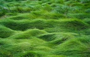 grass, green