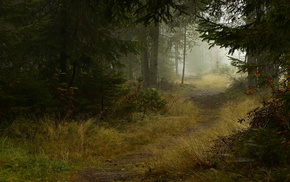 trees, autumn, mist, nature, forest