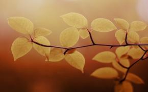 macro, nature, leaves, twigs