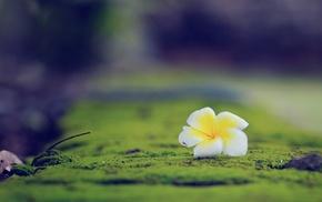 глубина резкости, природа, цветы, макро