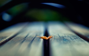 depth of field, nature, wooden surface, leaves, macro
