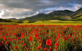 небо, тучи, поле, горы, маки, природа