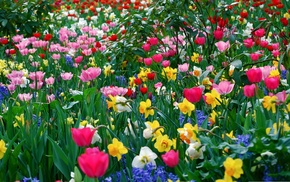 glade, park, spring, flowers