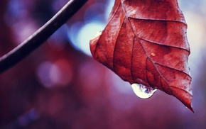 macro, water drops, leaves, nature