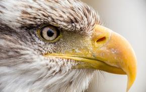 predator, animals, bird