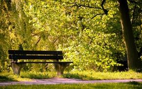 greenery, runway, Sun, tree, nature