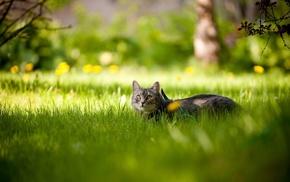 muzzle, cat, animals, grass, twigs