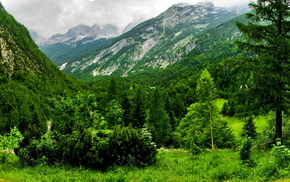 forest, Switzerland, mountain, nature, summer