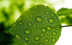 greenery, water, macro, leaf, Sun