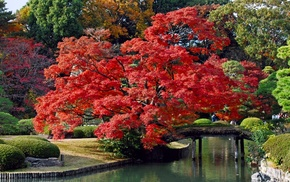 greenery, trees, bushes, red, river