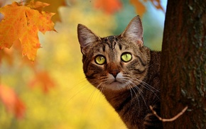 muzzle, animals, tree, eyes, leaves