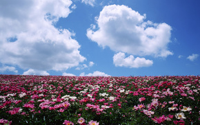 stunner, field, sky, flowers, clouds