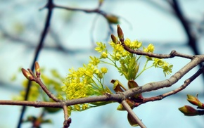 spring, nature, branch