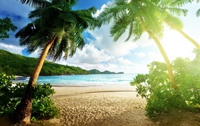 sand, jungle, tropics, nature, stunner