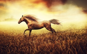 wheat, animals, horse, field